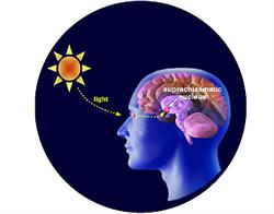 Un ormone straordinario nella regolazione del network Pnei: la melatonina. 1/3